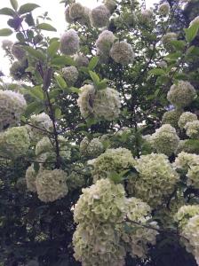 Flowering Tree 1a
