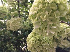 Flowering Tree 1b