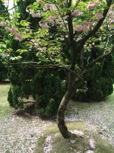 Flowering Tree 3